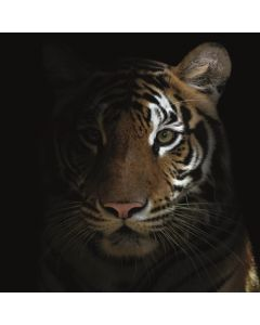 ALU PANEEL 120x120CM TIGER AT NIGHT